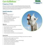 AAEP_Equine_Dental_Care_Guidelines_p1
